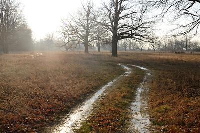 Дорога в Дубках деревья заморозки дубы дорога извилины