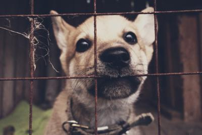 House собака щенок решетка клетка сетка