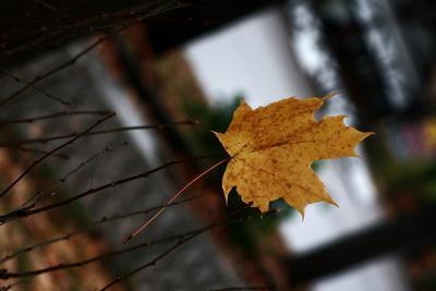 Листья жёлтые над городом кружатся. С тихим шорошом нам под ноги ложатся.... осень листья
