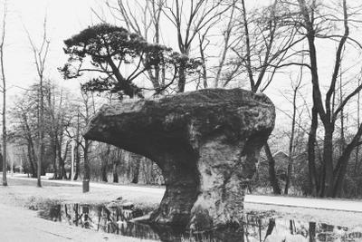 И камнях растут деревья