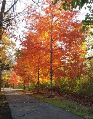 Осенняя алейка