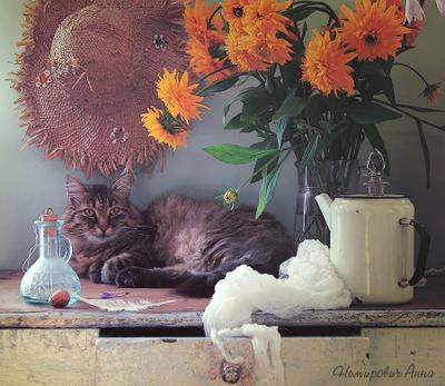 Крыс и рудбеккия натюрморт с цветами котом кот