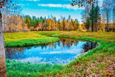 В гостях у осени! (5) Осень Тайга Лес