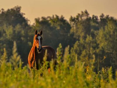 Встреча на рассвете лошадь конь рассвет
