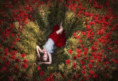 *** маки маковые поля блаженство девушка цветы красные