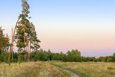 Дорога... Лето август вечер дорога