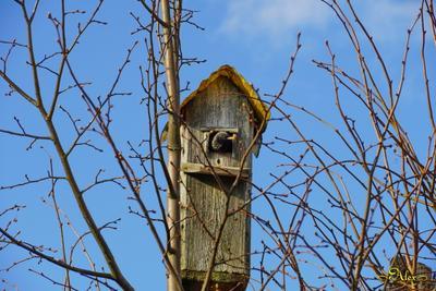 Дом скворца скворец скворечник птица весна