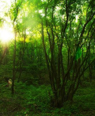Светило... солнце свет природа деревья отдых путешествие