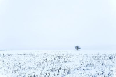 Одиночество зимний пейзаж дерево в поле природа
