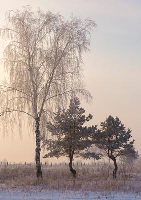 Утро в день водохрещення утро свет пейзаж водохрещення деревья поле рассвет