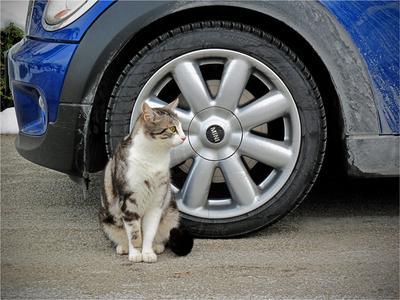 MINI MINI кот кошка колесо