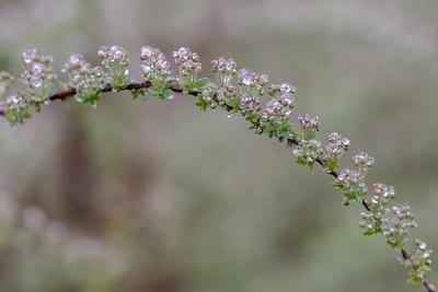 Бриллиантовое ожерелье ветка весна вода дождь