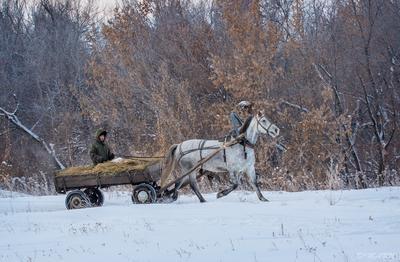 Лошадка мохноногая торопится, бежит. ))