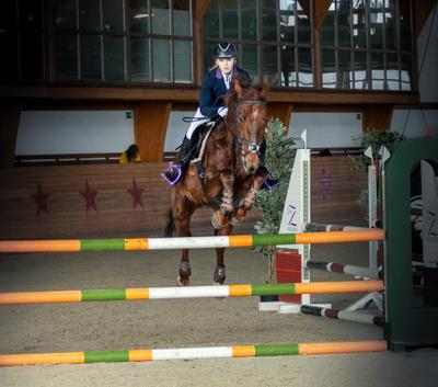 конкур девушка и лошадь