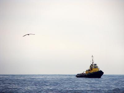 *** море, чайка, чайки, корабль, корабли