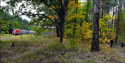Осенний   лес , кругом   такая   красота ! И   красоту   не  портит   даже   непогода !