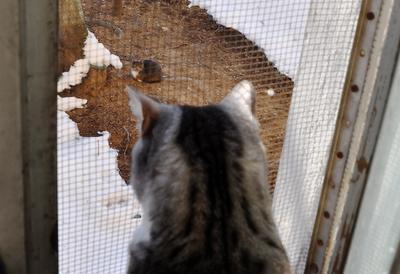 Предмартовское кошка Симка, мартовский кот