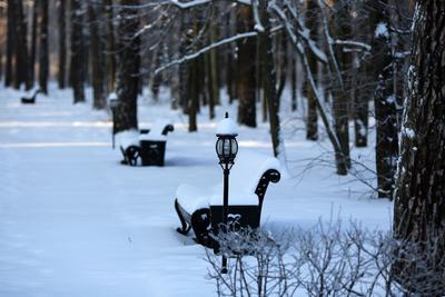 Фонарь. зима снег парк природа