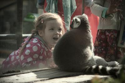 Есть контакт! зоопарк девочка лемур