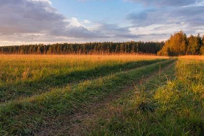 Рядом с Москвой осень закат подмосковье дорога