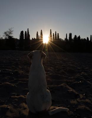 *** восход солнца собака силуэт