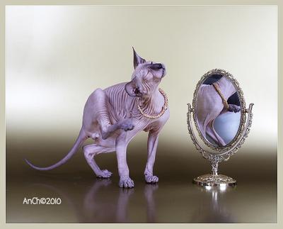 Свет мой зеркальце ... петерболд зеркало