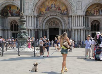 На прогулке) Венеция площадь день собака