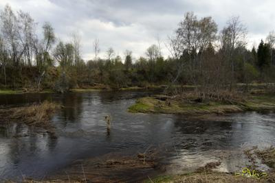 Весеннее половодье река природа пейзаж половодье весна