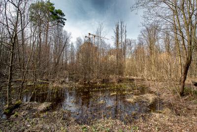 СКАЗОЧНЫЙ ЛЕС Москва Лосиный остров жилой комплекс Сказочный лес весеннее половодье