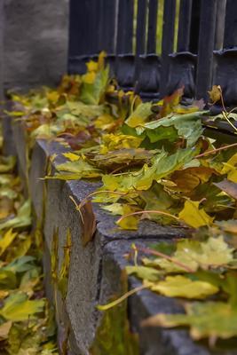 После дождя Листья дождь осень парк природа