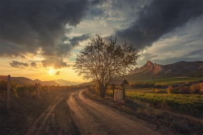У старого колодца крым осень пейзаж виноградники