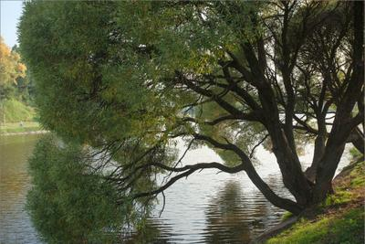 *** пейзаж дерево пруд