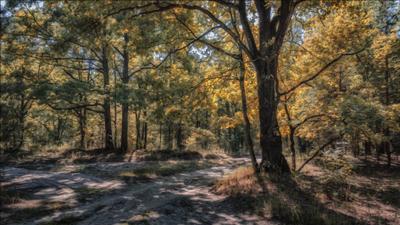 Рисунок осени. лето пейзаж