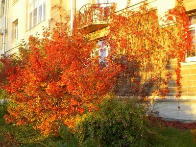 Осенний оранж осень ярко солнце