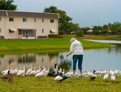 Гули-гули, цып-цып-цып... птицы кормление Флорида