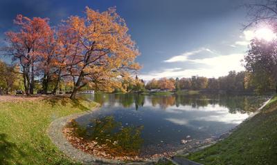 околдована осенью... золото осени Останкинский пруд