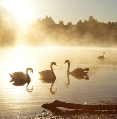 Лебединое озеро Рассвет