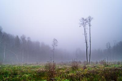 Осеннее утро Осень лес