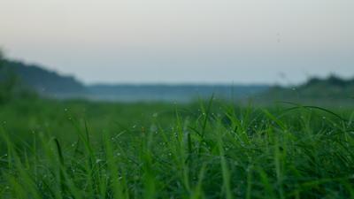 Свежесть Река лес трава капли вечер