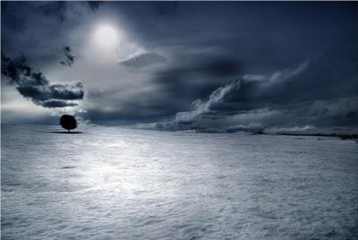 лунная  соната-3 луна  дерево  снег  поле  тучи