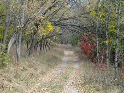 Осень в лесу осень лес природа