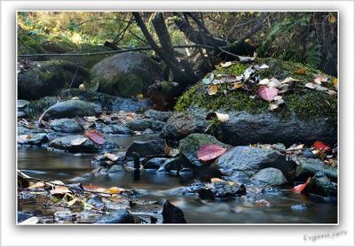 Лесной ручей осень ручей лес листья