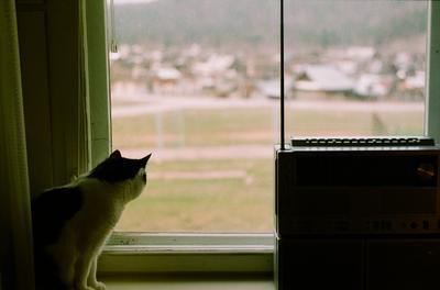 *** кот окно пленка радиоприемник