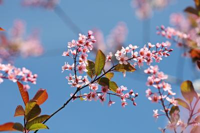 Весенний позтив небо