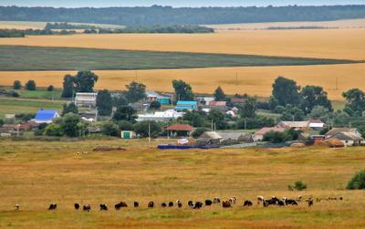 Сельский пейзаж.