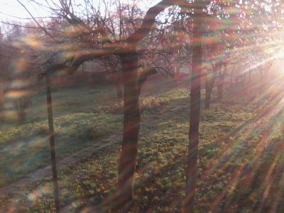 чудесное утро 9 ноября утро газон сад парк солнце блики радуга деревья