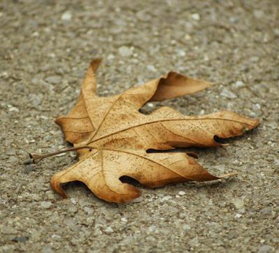 Вспоминая осень...