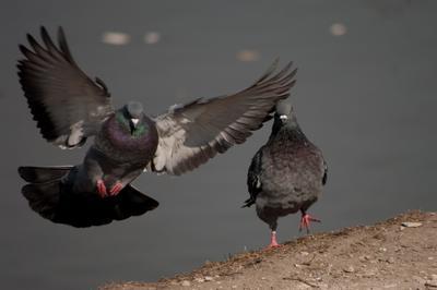 Заход на посадку птицы город крылья