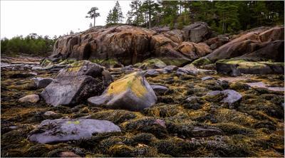 """Из фотосериала """"Кий-остров"""" фотография путешествия остров Кий Белое море отлив водоросли лето пейзаж природа Фото.Сайт Светлана Мамакина Lihgra Adventure"""