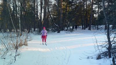 На лыжне в Серебряном Бору.... Серебряный бор лыжня